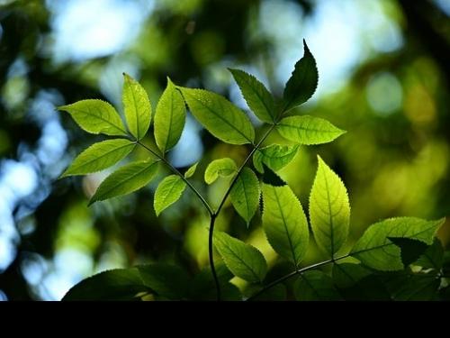 Avanços no Licenciamento Ambiental em Minas Gerais