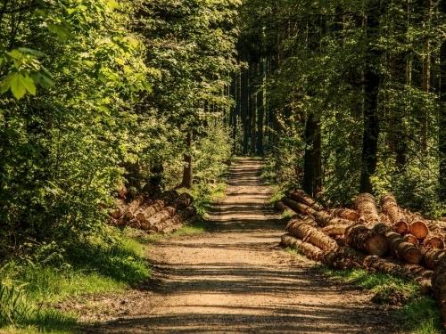 Recursos Florestais: Aspectos Técnicos e Legais